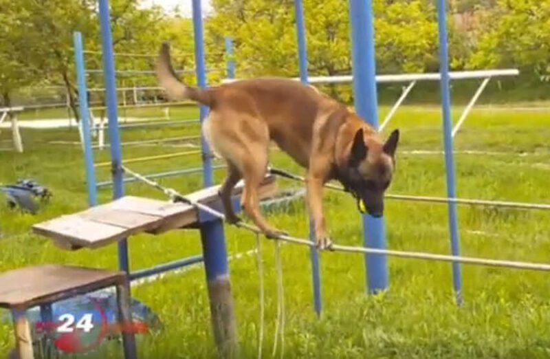 כלב המשטרה