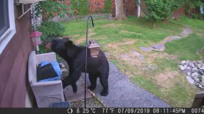 דוב רעב בניו ג'רזי