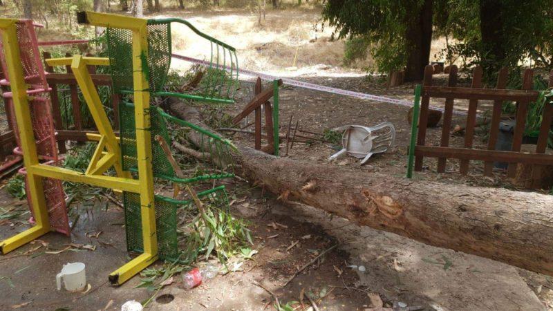 """העץ שקרס בפארק על הילד שנהרג (צילום זק""""א)"""