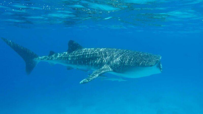 לוויתן ענק בשמורת האלמוגים (צילום: שני אלוש)