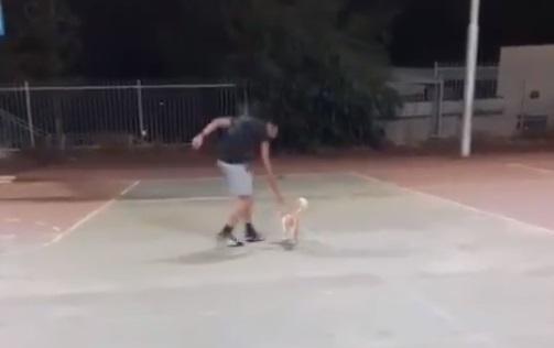 בועט בחתולה (צילום מסך)