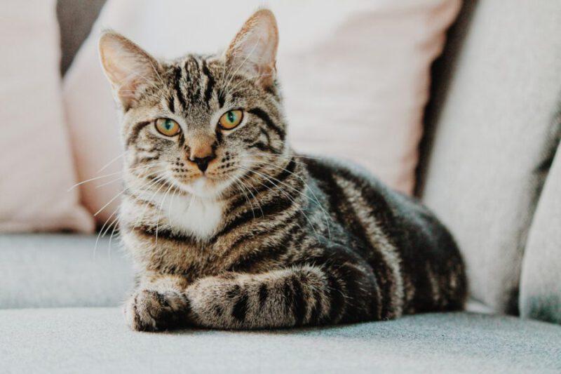 חתול בית, צילום: Erik-Jan Leusink